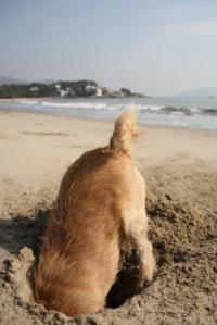 DogDigging